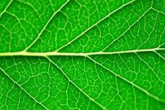 Grünes Blattmakro Lizenzfreies Stockfoto