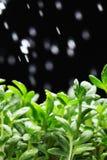 Grünes Blattmakro lizenzfreie stockbilder
