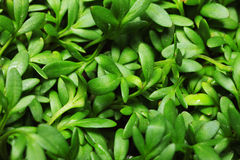 Grünes Blattmakro stockfotos