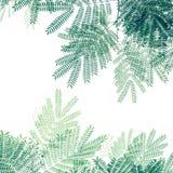 Grünes Blattmuster auf weißem Hintergrund, kreativer Plan O der Natur Lizenzfreie Stockfotos