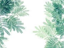 Grünes Blattmuster auf weißem Hintergrund, kreativer Plan O der Natur Stockfotografie