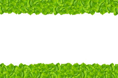 Grünes Blattmuster lokalisiert lizenzfreies stockbild