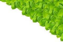 Grünes Blattmuster lokalisiert lizenzfreies stockfoto