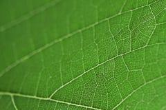Grünes Blattstrukturmakro Stockbild