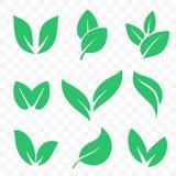 Grünes Blattvektor Bio-eco organische Ikonen eingestellt lizenzfreie abbildung