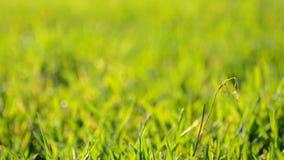 Grünes Blured-Gras mit Fokus-Bewegung stock video footage