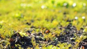 Grünes Blured-Gras mit Fokus-Bewegung stock footage