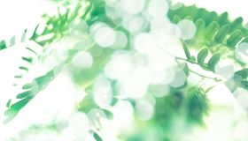 Grünes bokeh mit BlattfederHintergrund Stockfotos