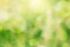 Grünes bokeh natürlicher Hintergrund Stockbilder