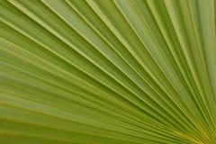 Grünes diagonales Palmblatt lizenzfreies stockfoto