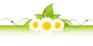 Grünes eco Feld Lizenzfreies Stockbild