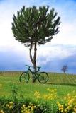 Grünes Fahrrad auf dem Gebiet Lizenzfreie Stockfotografie