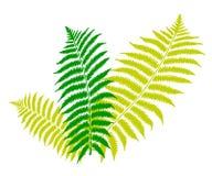 Grünes Farnblatt Lizenzfreies Stockfoto