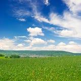 Grünes Feld über blauem Himmel Lizenzfreie Stockbilder