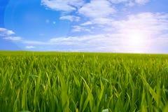 Grünes Feld Stockfoto