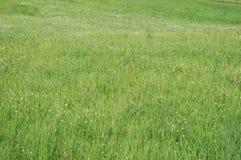 Grünes Feld stockbilder