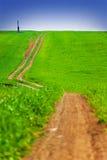 Grünes Feld Lizenzfreie Stockfotografie