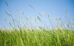 Grünes Feld Stockfotografie