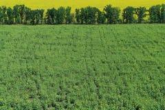 Grünes Feld. Lizenzfreies Stockfoto