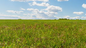 Grünes Feld stock video