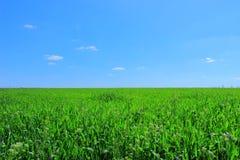 Grünes Feld Lizenzfreie Stockbilder