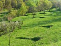 Grünes Feld auf einem Hintergrund der Stadien des blühenden Frühlingsbaums Stockfoto