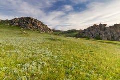 Grünes Feld auf einem Hintergrund des blauen Himmels Stockfotografie