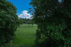 Grünes Feld, Bäume und blauer Himmel mit Wolken Lizenzfreie Stockbilder