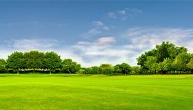 Grünes Feld, Baum und blauer Himmel Groß als Hintergrund, Netzfahne lizenzfreies stockbild