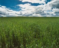 Grünes Feld, das in den blauen Himmel einsteigt lizenzfreie stockfotos