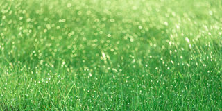 Grünes Feld, das am Morgen glüht Lizenzfreie Stockfotografie