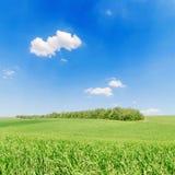 Grünes Feld der Landwirtschaft und blauer Himmel stockbilder