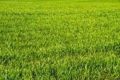 Grünes Feld des Grasbeschaffenheitshintergrundes Lizenzfreies Stockfoto