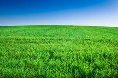 Grünes Feld des Grases unter blauem Himmel Stockfotos