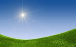 Grünes Feld des Sommers Stockfoto