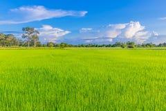Grünes Feld des ungeschälten Reises des abstrakten der Weichzeichnung Schattenbildes halb mit dem schönen Himmel und der Wolke in Stockfotos