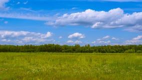 Grünes Feld an einem sonnigen Tag stockfotografie