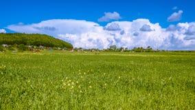 Grünes Feld an einem sonnigen Tag Stockbild