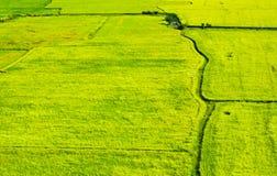 Grünes Feld, fühlen sich grün Lizenzfreie Stockfotografie