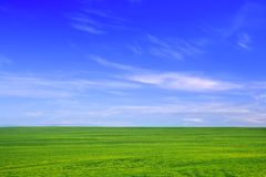 Grünes Feld gegen blauen Himmel Lizenzfreie Stockfotos