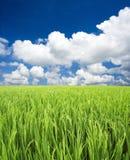 Grünes Feld, Himmel und Wolken Lizenzfreie Stockbilder