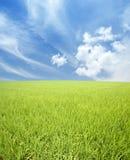 Grünes Feld, Himmel und Wolken Stockbild