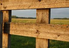 Grünes Feld hinter Zaun Stockfoto