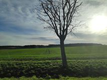 Grünes Feld im Winter stockfotos