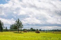 Grünes Feld in Lettland Lizenzfreies Stockbild