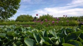 Grünes Feld mit Baumhaus Stockfotografie