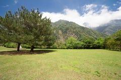 Grünes Feld mit Berg und Bäumen Lizenzfreies Stockfoto