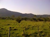 Grünes Feld mit Bergen auf der Horizont-, natürlichen und warmenumwelt Stockfoto