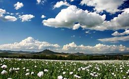 Grünes Feld mit blauem Himmel Lizenzfreie Stockfotos