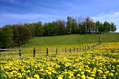 Grünes Feld mit blauem Himmel Stockbilder